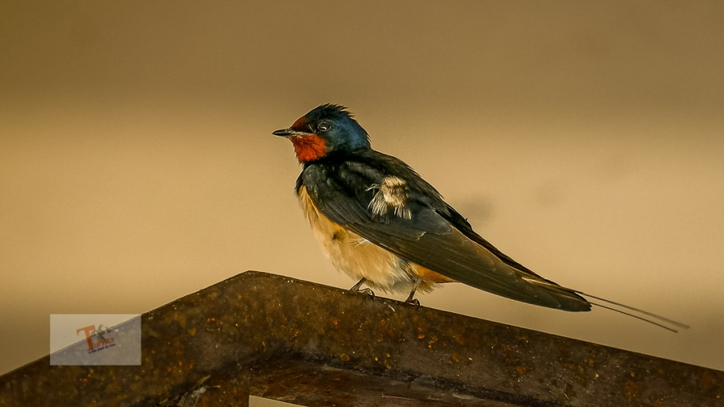 Comacchio, uccello- Turista a due passi da casa