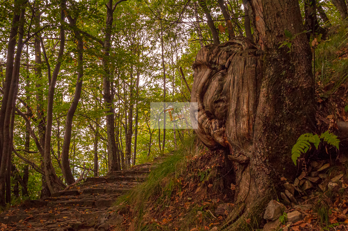 Mulini di Piero, sentiero verso Montviasco - Turista a due passi da casa
