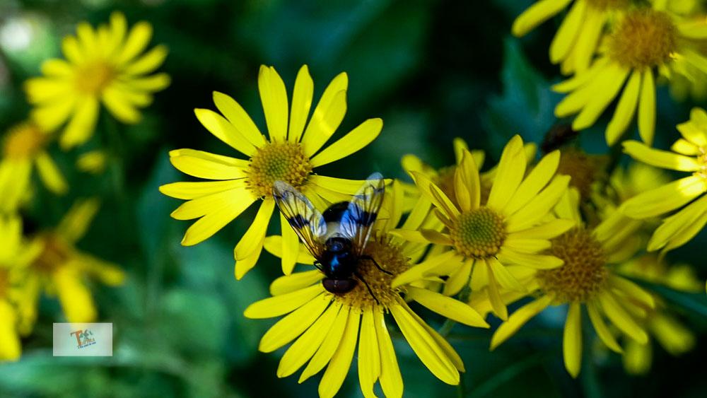 Fonte Romana, flora e fauna- Turista a due passi da casa