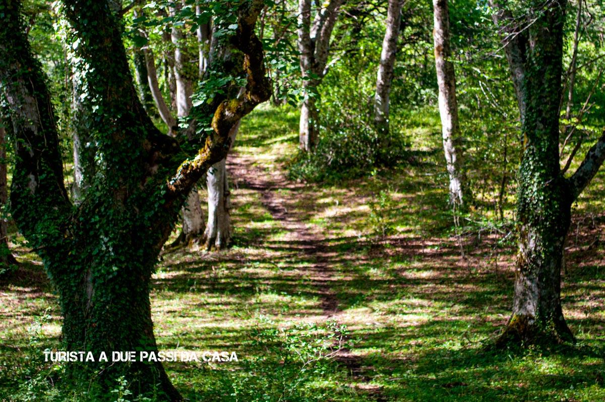 Bosco di Sant'Antonio - Turista a due passi da casa